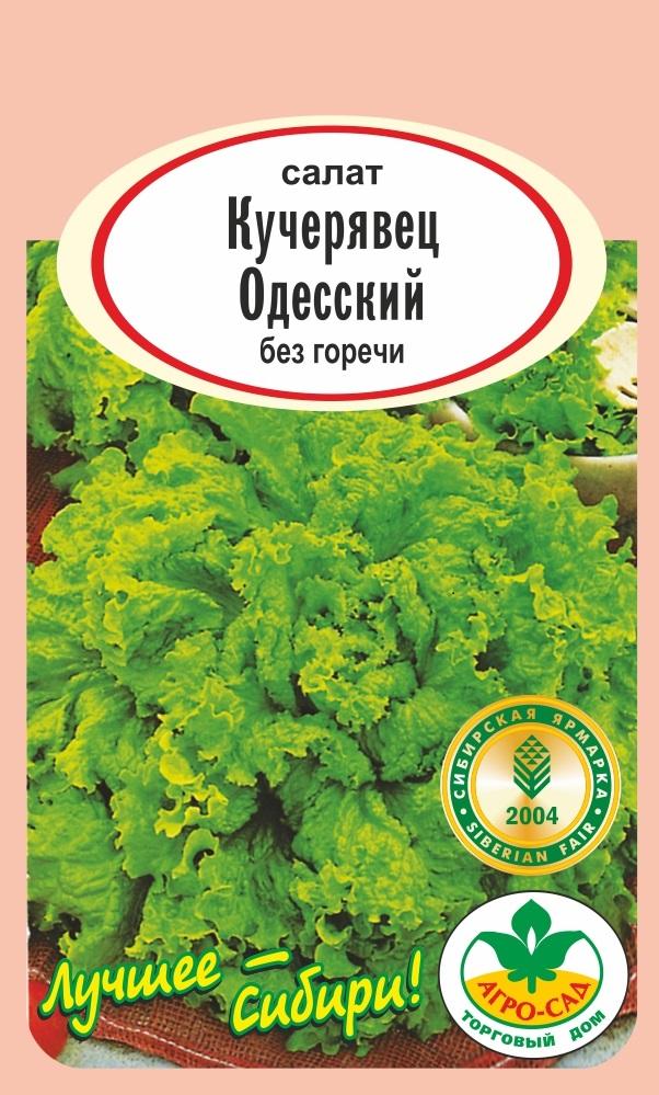 Салат кучерявец одесский выращивание из семян 21